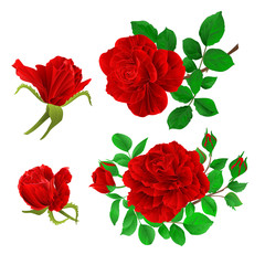 Red roses with buds and leaves vintage  on a white background set first vector illustration editable hand draw