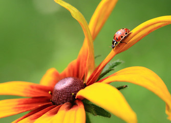 To the center of the Universe.The bug a ladybug goes to a flower tsetr as to the center of the Universe.