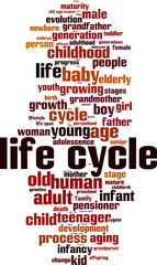 Life cycle word cloud