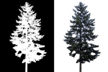 pine tree isolated