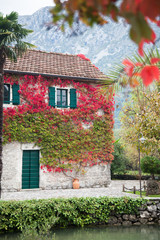 Autumn vine red and green leaves decorate stone wall of old rural country house with windows, wooden bets, door and tile roof.
