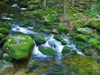 Trekking in beautiful nature