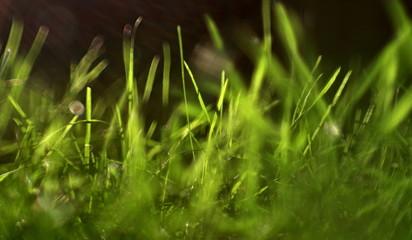 zielone trawy