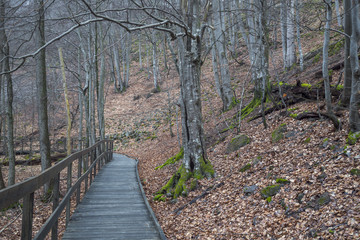 A wooden walking path for tourists among an old  beech forest in a national park.
