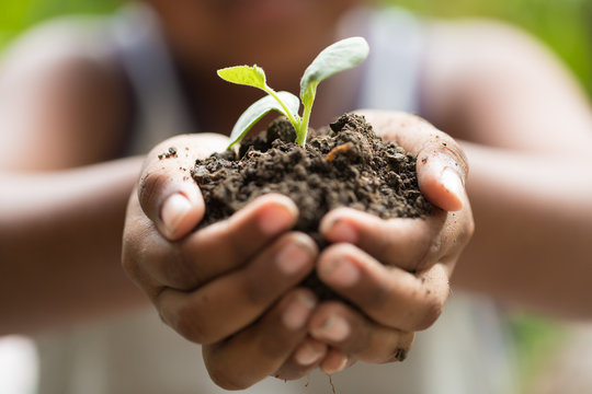 Child holding young seedling plant in hands tree bokeh background. Concept Earth day, Selective focus on plant