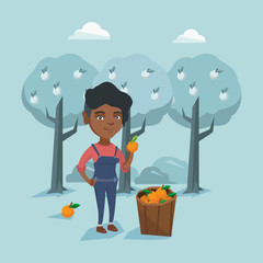 Young african-american gardener collecting oranges. Gardener standing near basket with oranges and holding orange in hand on the background of orange trees. Vector cartoon illustration. Square layout.