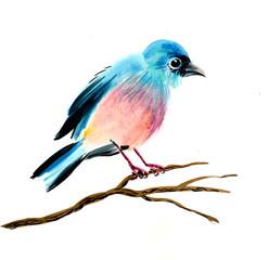 Bird on a branch. Watercolor sketch