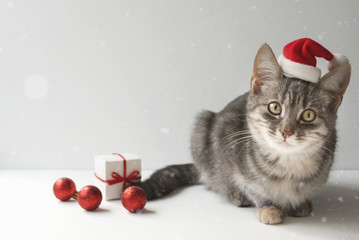 A cute christmas cat on light background. Christmas decor. Red balls, Santa hat, gift box. Snow blur effect.