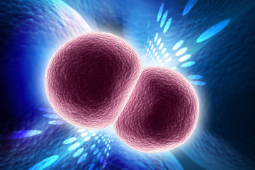 3d rendered Neisseria meningitidis or meningococcus is a bacterium that can cause meningitis and other forms of meningococcal disease on color background
