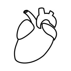 Human heart symbol icon vector illustration graphic design