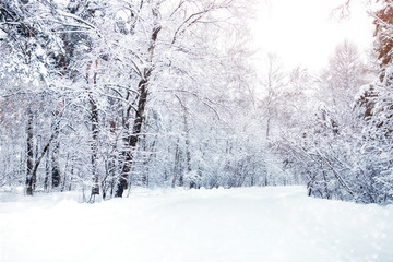 Beautiful winter landscape with snow covered trees. Happy New Year. Merry Christmas