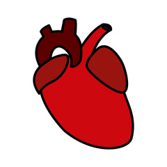 Human heart symbol icon vector illustration graphic design