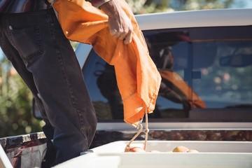 Farmer loading apples in truck
