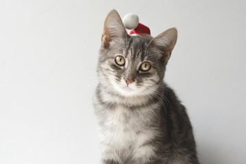 Portrait of Christmas Cat.