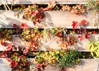Fence with autumn leaves
