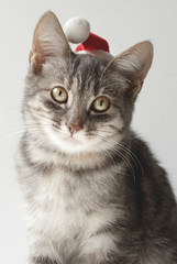 Portrait of gray cat. Christmas card.