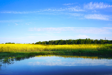 A beautiful yellow rape field against the blue sky with clouds is reflected in the lake water. A bright artistic image. Rapeseed field with background for text.
