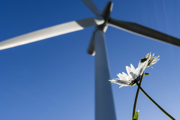 Wind turbine from the ground