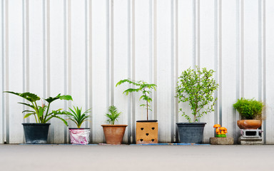 still life of various plants in the flower pots outdoors with copy space