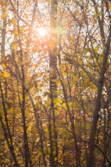 Rays of light shining through colourful autumn leaves
