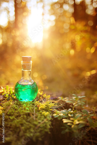 herbal green tincture on a stump in the forest in the sun at sunset
