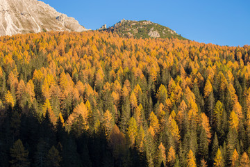 Firs and larches in an autumn landscape of the Dolomites, Italy