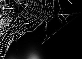 spider web on a dark background