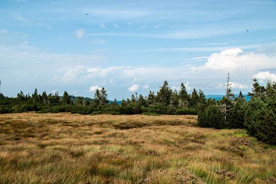 Die Hornisgrinde im Schwarzwald