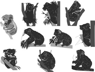 ten black koala sketches on white background