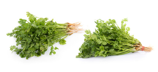 fresh coriander leaves on white background