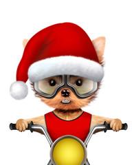 Cute Dogs Santa on a chopper. Christmas concept