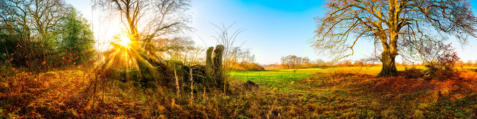 Panorama of a autumnal landscape with bare oak tree and green meadow at sunrise