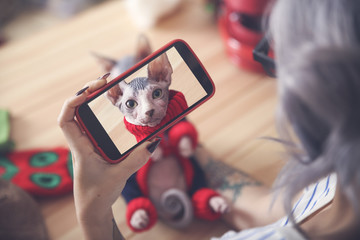 Woman taking cell phone picture of Sphynx cat wearing pullover