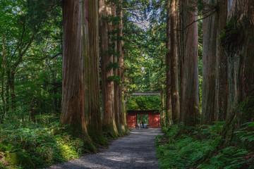 戸隠神社奥社の参道風景