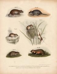 Old illustration of animals.