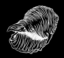 Large sea shell, freehand drawing