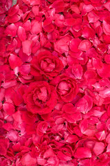 Lot of rose petals