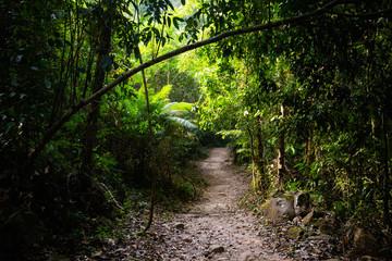 Jungle waterfall on Koh Kood