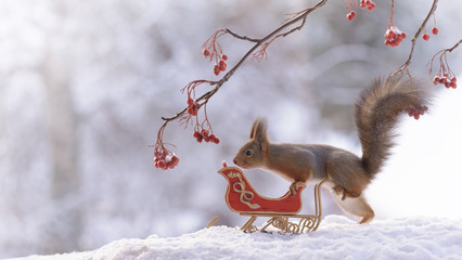 squirrel  with sleigh on snow