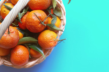 organic ripe mandarins in basket on blue background..tangerines with leaves in a beautiful basket