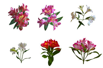 Set of lily flowers,  isolated on white background. Suitable for designers.