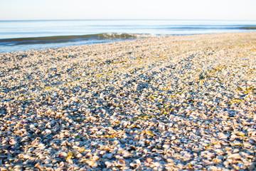 Sea shells on sunrise coastal sandy beach seascape