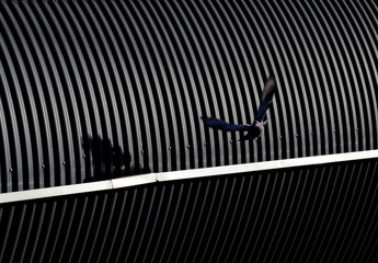 A pigeon flies from the roof structure of a pedestrian walk way in Geneva