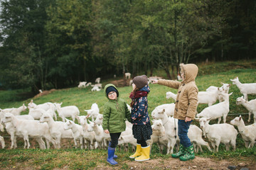 Three children on the goats farm outdoors feeding animals
