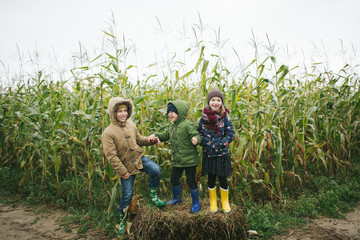 Two little brothers and sister standing in cornfield smiling