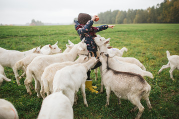 Little kids playing with goats on cheese farm outdoors