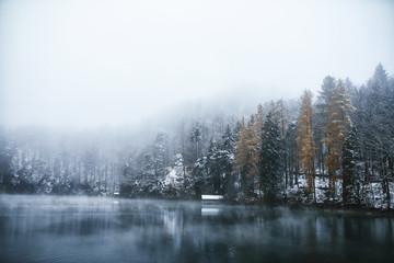 winterliche Landschaft am Alpsee nahe des Schlosses Neuschwanstein