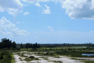 Overlooking the Florida Wetlands