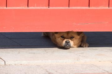 Puppy lying on the door