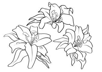 Flower Piece Tattoo pattern lined draw